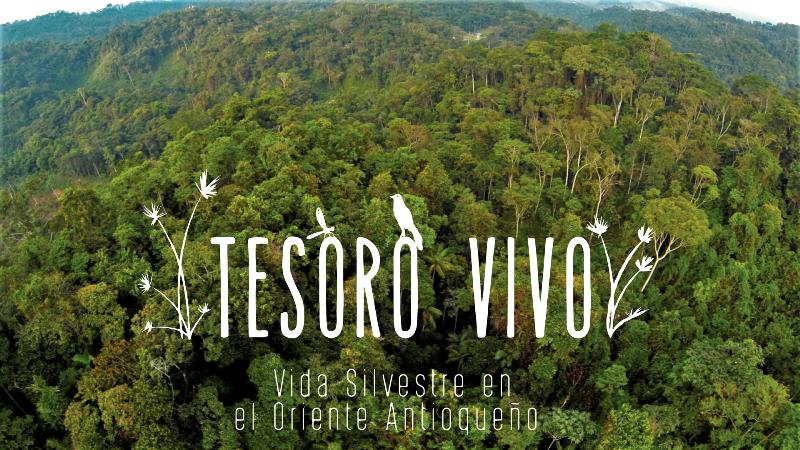 """Photo of Disfruta del documental """"TESORO VIVO"""" vida silvestre en el Oriente Antioqueño"""