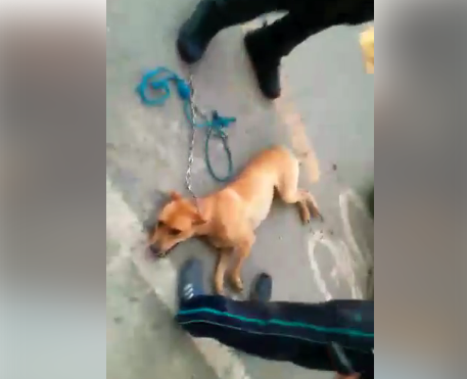 Photo of Indignante caso de maltrato animal en el Carmen de Viboral