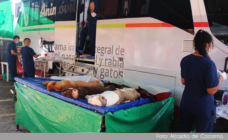 Photo of Con éxito se realizó jornada de esterilización para Mascotas en Cocorná