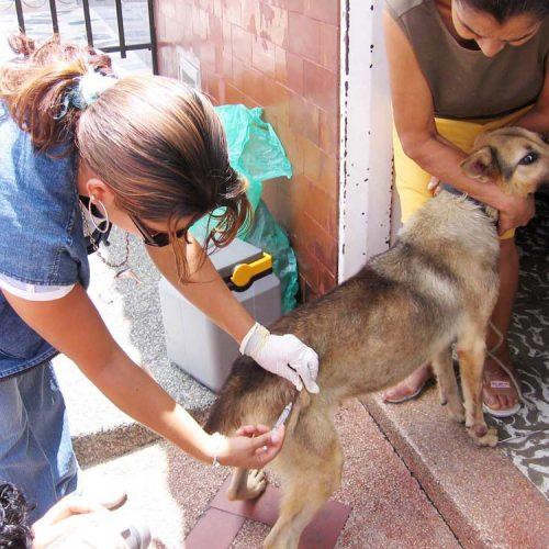 El Centro de Bienestar Animal de Rionegro se ha convertido en un referente a nivel nacional.