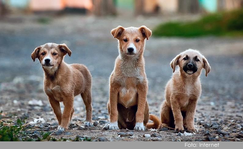 Photo of En la Ceja han aumentado las cifras de mascotas adoptadas; solo en el mes de febrero fueron 24 perros y gatos.