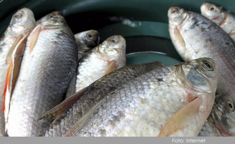 Photo of Recomendaciones de la secretaría de salud de Antioquia con la calidad del pescado