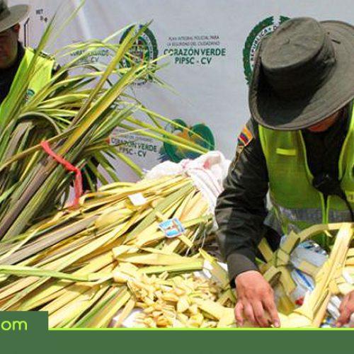 En Semana Santa, autoridades y entidades ambientales intensifican labores contra el tráfico de fauna y flora
