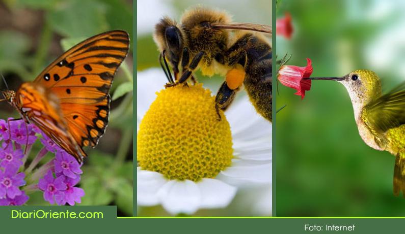 Photo of Este 20 de mayo, jornada nacional en defensa de las abejas y polinizadores