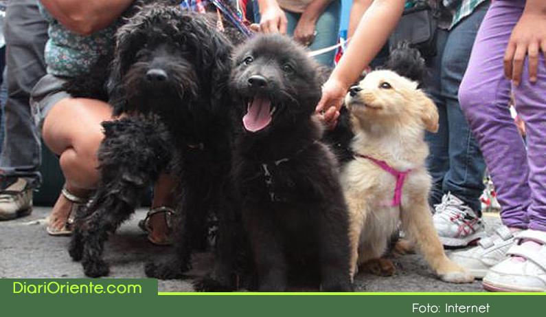 Photo of Con más de 140 perros y gatos finalizaron jornadas de esterilización del mes de junio en Guatapé