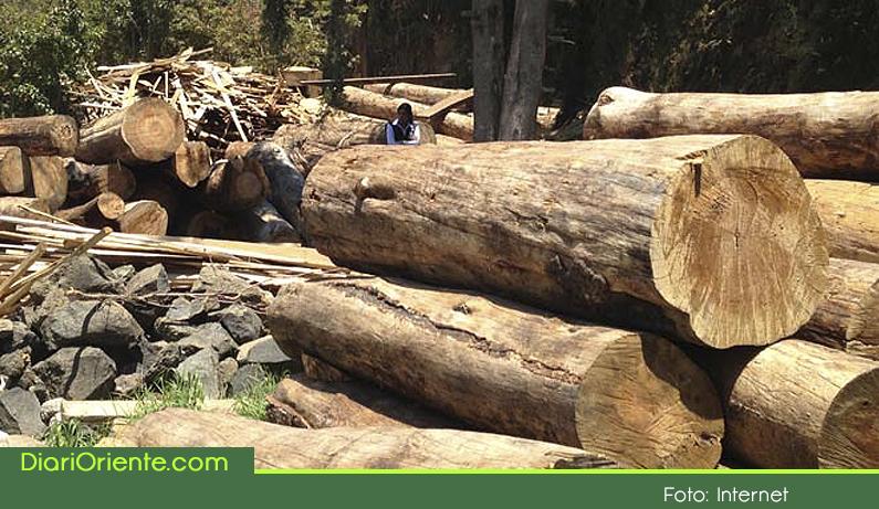 Photo of Cornare busca impulsar el manejo forestal sustentable con todas las empresas madereras del Oriente Antioqueño