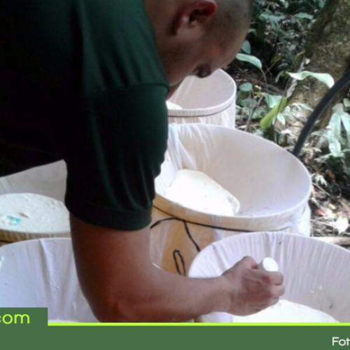 Destruyen laboratorio de cocaína en San Luis perteneciente al Clan del Golfo