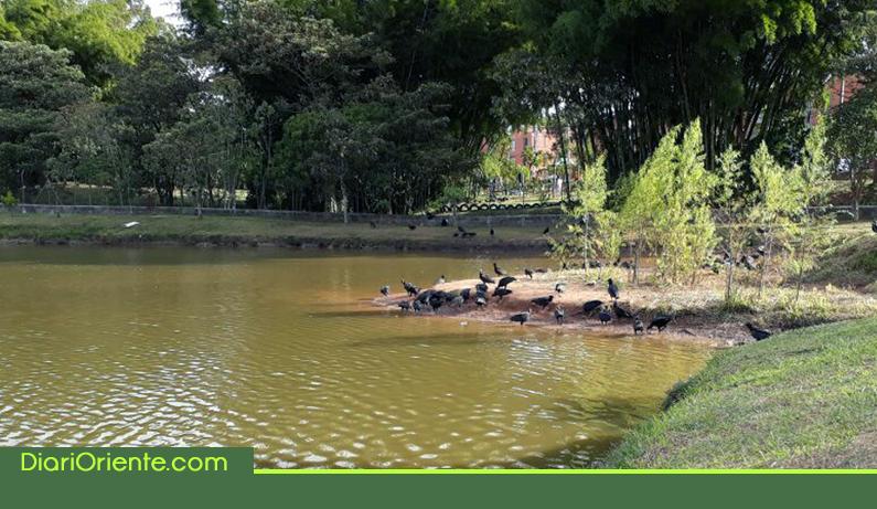Photo of En Rionegro, autoridades investigan mortandad de peces en el Lago de El Porvenir
