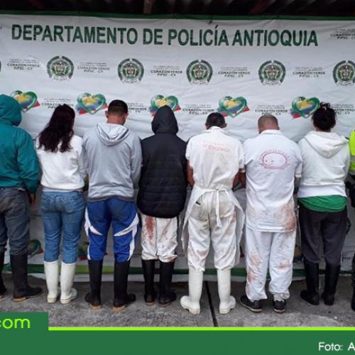 Desmantelan matadero clandestino de caballos en Guarne