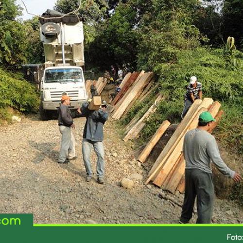 En el Oriente Antioqueño continúan los operativos contra el tráfico de madera nativa