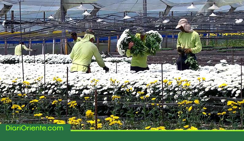 Photo of Antioquia exportó 152 millones de dólares en flores en el primer semestre del año