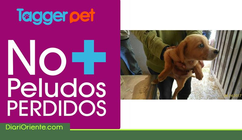 Photo of En Guarne innovan con campaña para ponerles chip a los perros y gatos
