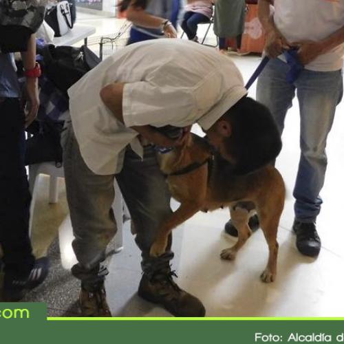Con éxito culminó la segunda jornada de adopción de mascotas en La Ceja