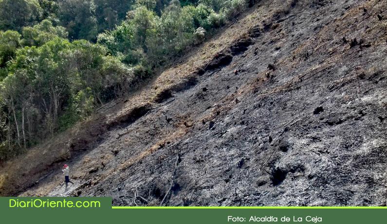 Photo of En La Ceja talan bosque nativo sin permiso ambiental