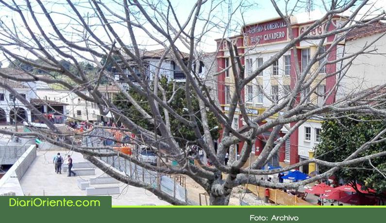 Photo of Ceiba rosada del parque principal de Rionegro, no aguantó más