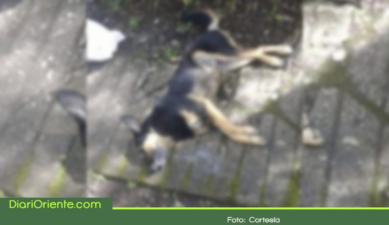 Photo of Indignación por envenamiento masivo de perros en Rionegro