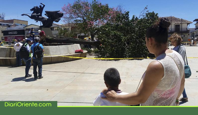 Photo of Susto en la Plaza de la Libertad de Rionegro tras caída de árbol