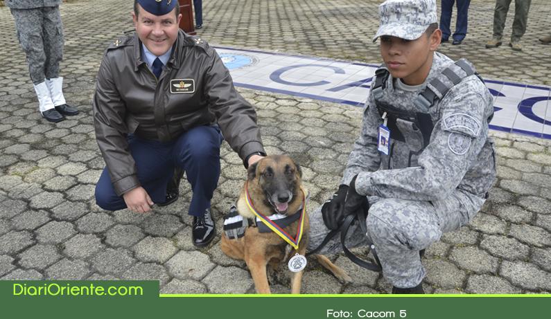 Photo of 'Jacky', canino más antiguo del CACOM 5 se jubiló con honores en la Fuerza Aérea