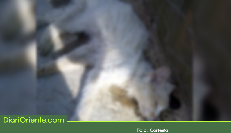 Photo of Denuncian presunto caso de envenenamiento de mascotas en Rionegro