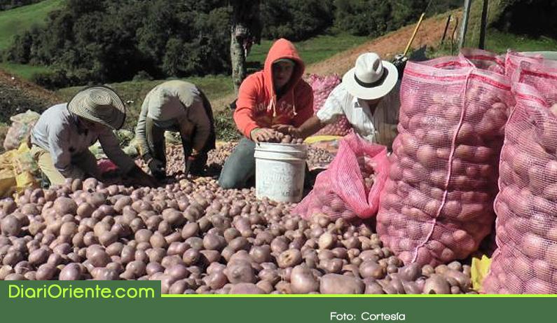 Photo of Con 100 familias campesinas se fortalece la producción de papa en La Unión