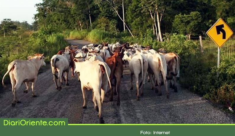 Photo of Preocupación en Alejandría por robo de ganado