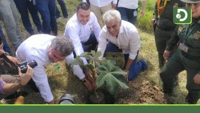 Photo of En el Oriente Antioqueño se fija una meta de tres millones de árboles sembrados para 2022