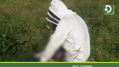 Photo of En Granada, ataque de abejas dejó un muerto y cinco afectados.