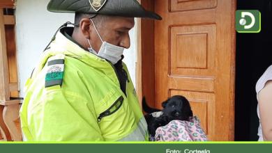 Photo of Autoridades atendieron caso de maltrato animal a un cachorro en Rionegro