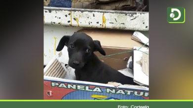 Photo of Conmovedor rescate de una perrita que había sido tirada a la basura en Rionegro