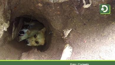 Photo of Autoridades de Rionegro rescatan una perra y sus cachorros atrapados en un hueco