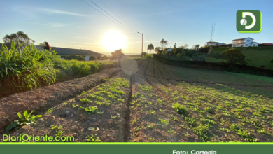 Photo of Marinilla: Invertirán cerca de $14 mil millones en desarrollo agrotecnológico