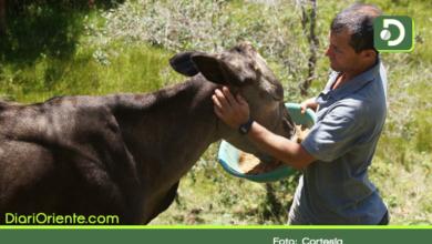 Photo of Oriente Antioqueño: Conozca los protocolos de bioseguridad para reactivar el sector de la ganadería