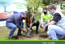 Photo of Con jornada simbólica se dio inicio a la siembra de 25 millones de árboles en Antioquia