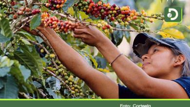 Photo of Plan Nescafé, iniciativa para fortalecer la producción de café de calidad en el Oriente Antioqueño