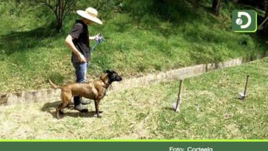 Photo of En la Ceja, entrenan seis perros, que con su olfato podrían detectar el coronavirus