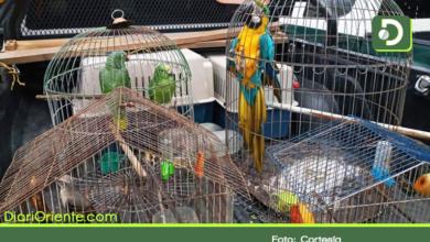 Photo of Rescatan aves silvestres que tenían como mascotas en El Carmen y El Retiro