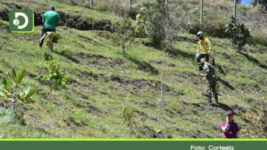 Photo of Siembran 300 árboles en el parque Las Cometas del municipio de El Retiro