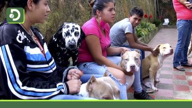 Photo of Antioquia: Mañana se realizará jornada gratuita para vacunar contra la rabia a perros y gatos