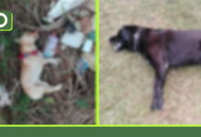 Photo of Rionegro: Alerta por envenenamiento masivo de perros y gatos, 13 casos en los últimos días.