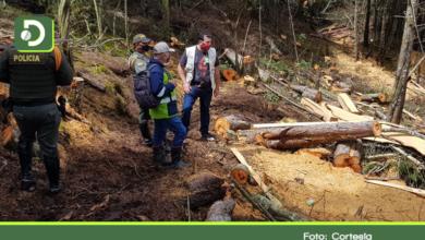 Photo of Autoridades detienen tala ilegal de árboles en Guarne, se salvaron 4 hectáreas de bosque