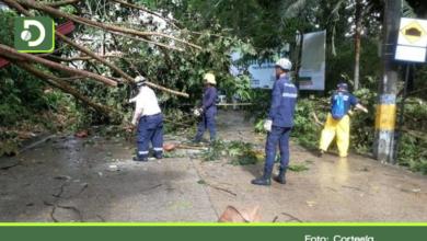 Photo of Árboles caídos y cortes de energía dejaron fuertes lluvias en San Rafael