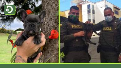 Photo of Policía recuperó a Mía, una perrita robada en la vereda Ojo de Agua de Rionegro