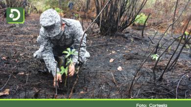 Photo of Tras incendio, reforestan 30 mil metros cuadrados de bosque en Rionegro