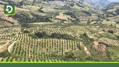 Photo of Productores de aguacate Hass del Oriente, firman convenio para lograr la sostenibilidad ambiental