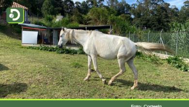 Photo of Usted puede adoptar a esta yegua con 3 meses de gestación, que sufrió de maltrato en Marinilla