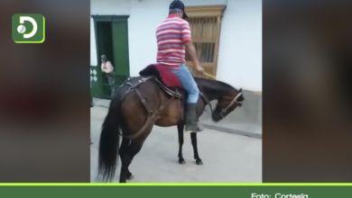 Photo of Video: indignante caso de maltrato animal a un caballo en Concepción.