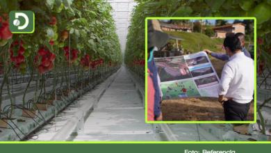 Photo of Para aumentar producción agrícola, Gobernación construirá en el Oriente invernaderos de última tecnología