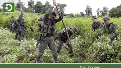 Photo of Según Ministro de Defensa, el Oriente Antioqueño está libre de cultivos de coca