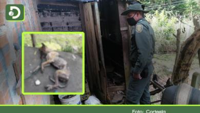 Photo of Denuncian aberrante caso de maltrato animal en El Santuario