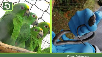 Photo of Gracias a la campaña Déjalos Volar, fueron recuperados 127 animales silvestres en El Retiro, Marinilla y La Ceja